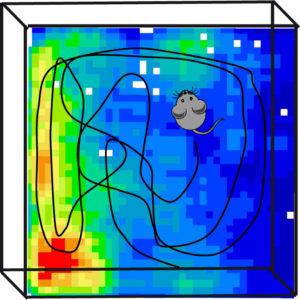 Registro de la actividad neuronal de una rata mientras explora un espacio abierto en busca de comida. La zona en color amarillo-rojo indica que la neurona monitorizada presentaba una actividad muy elevada al visitar zonas cercanas a una de las barreras del espacio abierto.