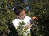 ORIHUELA (COMUNIDAD VALENCIANA).- 11/10/21/ El investigador Juan Miguel Valverde coordina el grupo de Investigación de Post-recolección de Frutas y Hortalizas del Centro de Investigación e Innovación Agroalimentaria y Agroambiental de la Universidad Miguel Hernández de Elche (CIAGRO-UMH) en un proyecto en el que se ha optimizado la técnica para provocar una situación de ligero estrés en el árbol para generar un mejor fruto con mayor presencia de antioxidantes y más resistentes a la pérdida de calidad durante el almacenamiento, distribución y venta.EFE/Morell